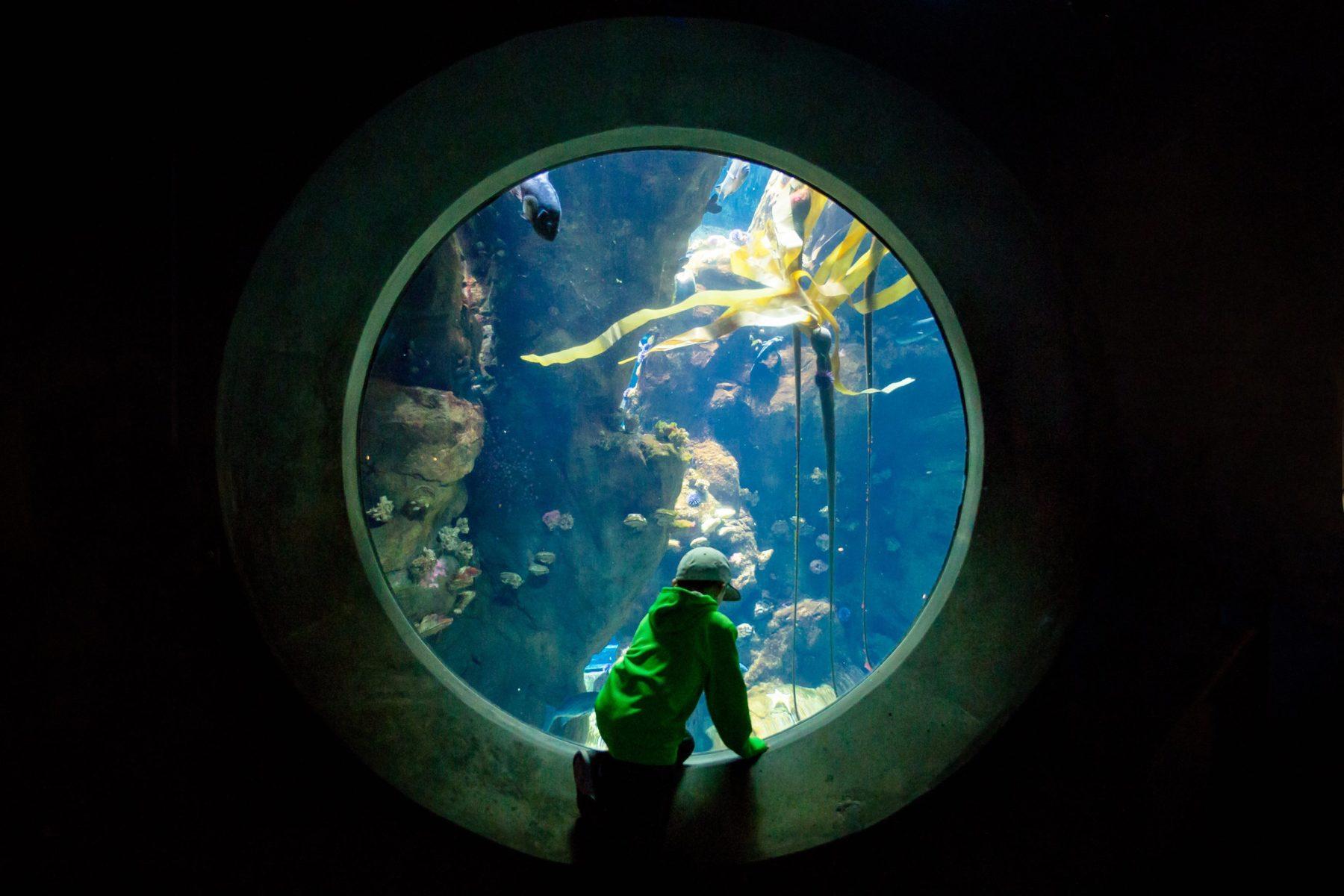 9 year old boy at aquarium